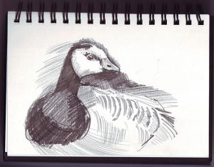 Barnacle-geese-2